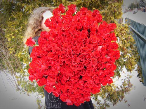 Bukiet 150 czerwonych róż