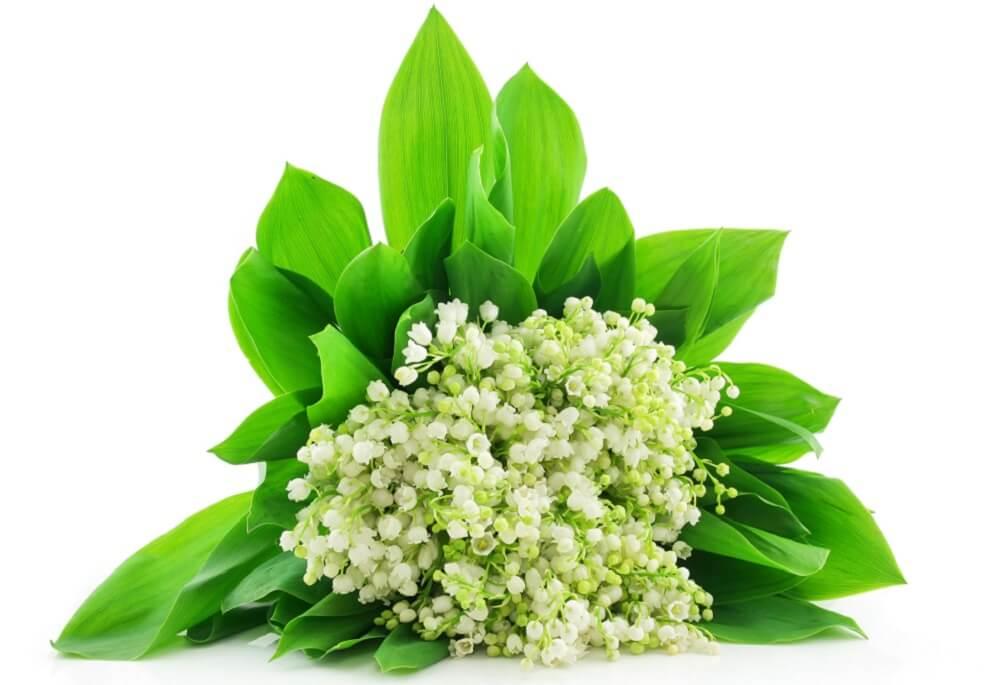 Bukiet kwiatów z białostockiej kwiaciarni