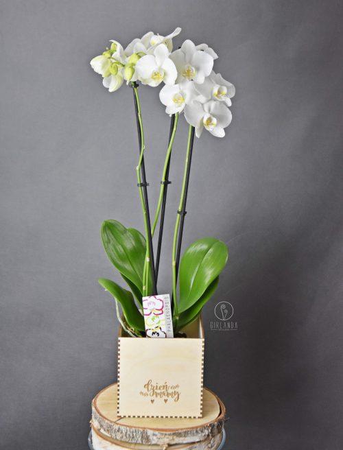 Szybka realizacja - kwiaty doniczkowe